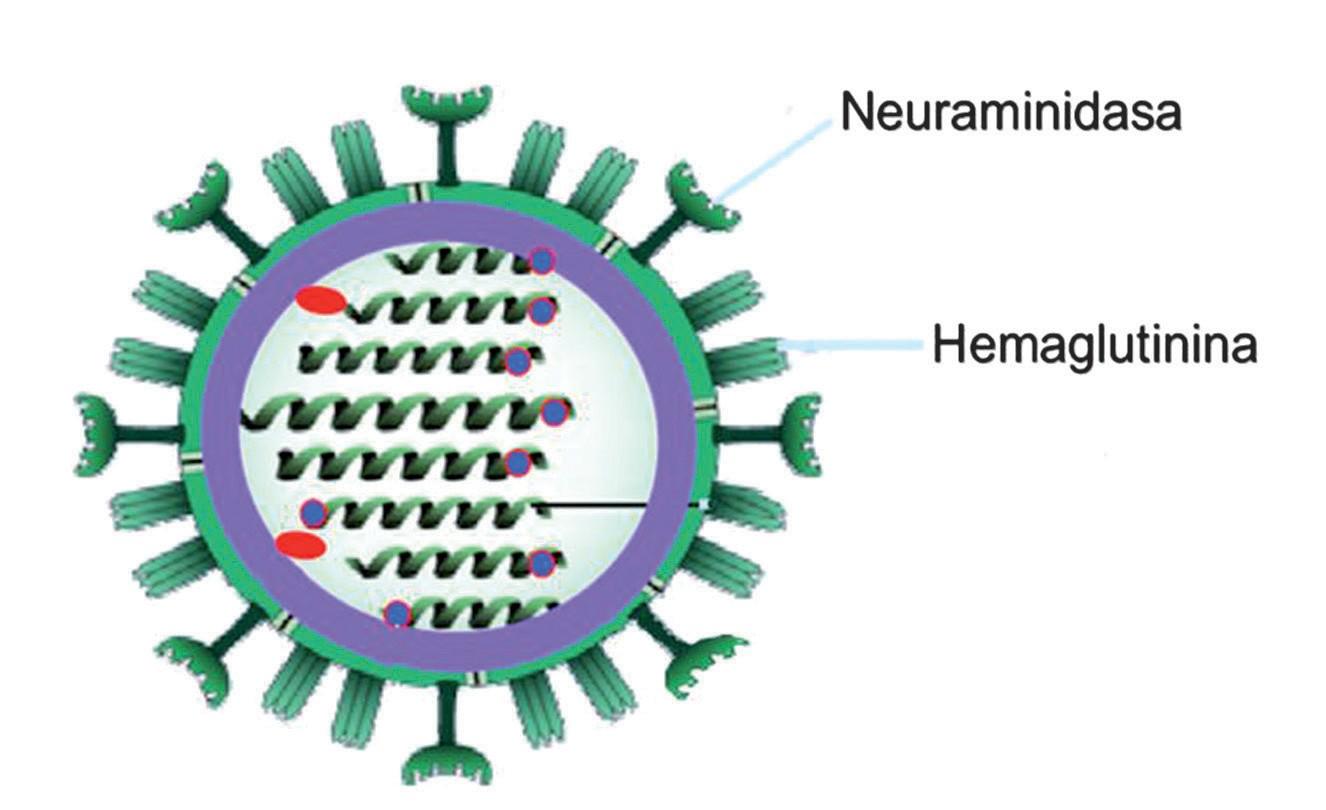 figura-gripe-1